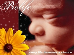 Pro Life.JPG
