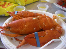 lobster June 4 2011.JPG