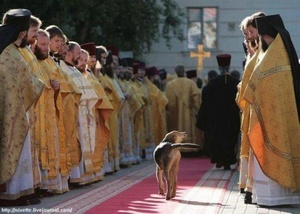 a dog in procession.jpg