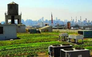 Brooklyn Grange Roof